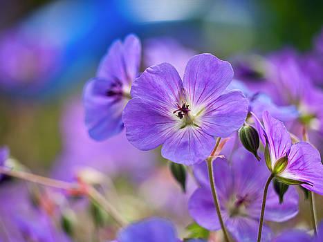 Purple Flowers by Rae Tucker