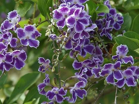 Purple Flowers by Robynne Hardison
