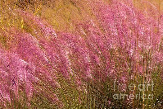 Purple Flowers by Susan Cliett