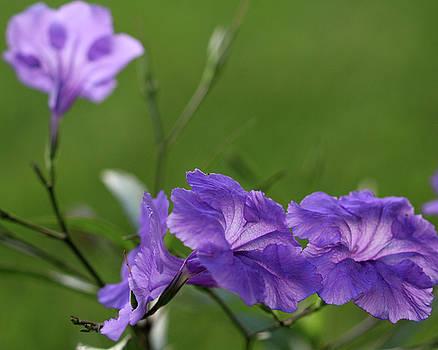 Purple Flowers by Terri Tiffany
