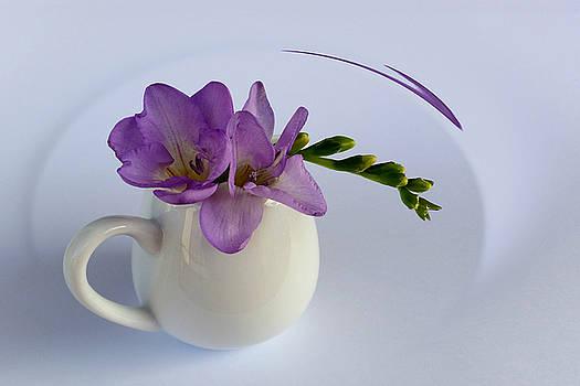 Purple Freesia Flower by Marinela Feier