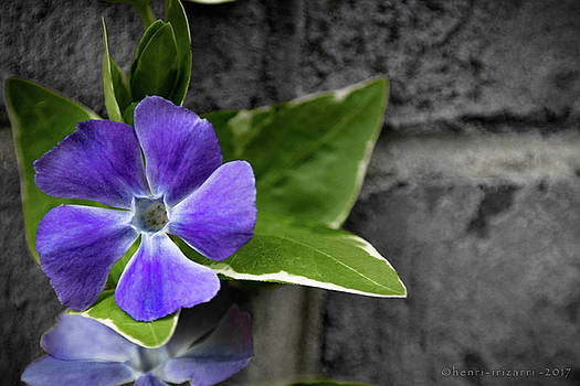 Purple Garden Flower by Henri Irizarri