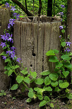 Purple garland by Hans Franchesco