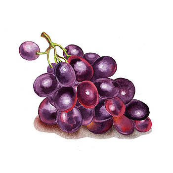 Purple Grape Watercolor  by Irina Sztukowski