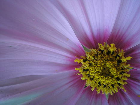 Purple Haze by Kim Blumenstein
