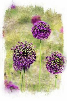 Purple Haze by Norma Warden