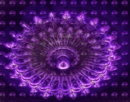 Purple Haze by Winnie Chrzanowski