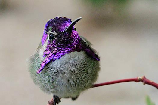 Purple Head by Shoal Hollingsworth