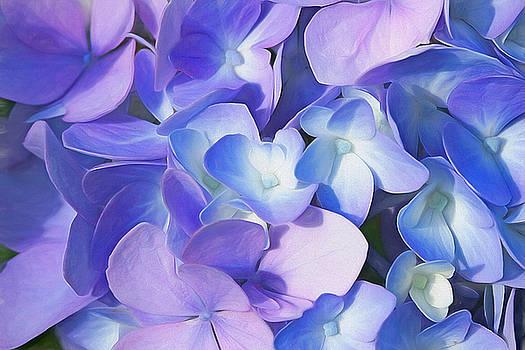 Purple Hydrangea by Cindi Ressler