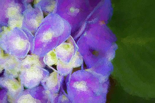 Purple Hydrangea Impression by Kathy Clark