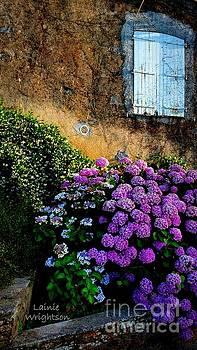 Purple Hydrangea by Lainie Wrightson