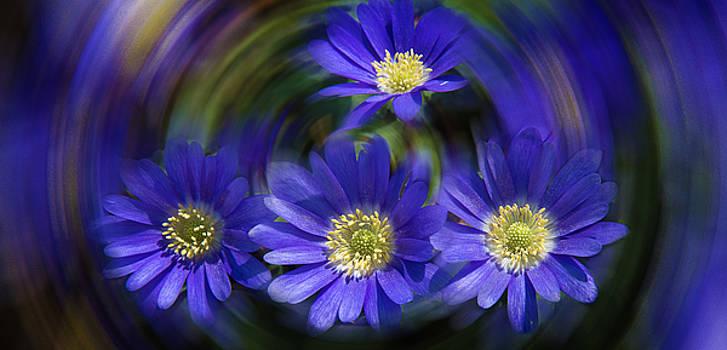 Milena Ilieva - Purple in Nature