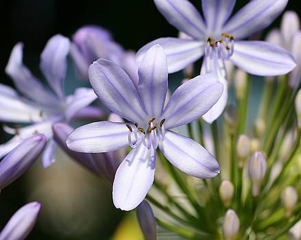 Purple in Pastel by Nikki Sandoval