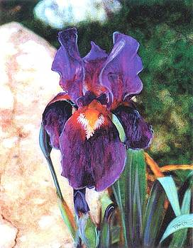 Purple Iris by Banning Lary
