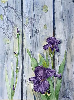 Purple Iris by Christine Lathrop