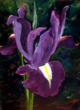 Purple Iris by Heidi Patricio-Nadon