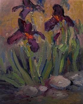 Purple iris in shade by R W Goetting