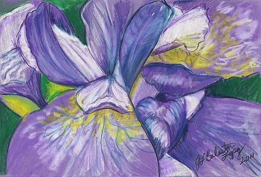 Jamey Balester - Purple Iris