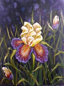 Purple iris by Kimberly Blaylock