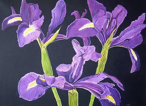 Purple Iris On Black by Sue Ervin