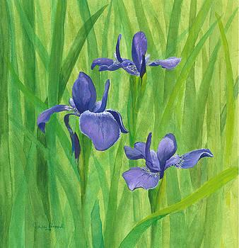 Phyllis Howard - Purple Iris