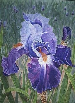 Purple Iris by Sue Ervin