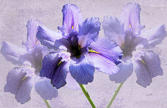 Purple Irises by Rosalie Scanlon