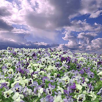 Purple by Jeff Burgess