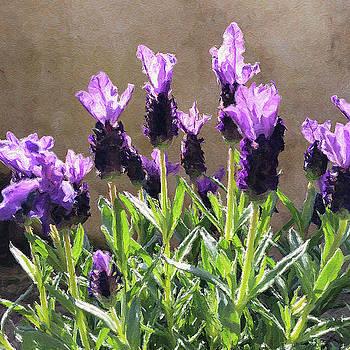 Purple by Julian Perry