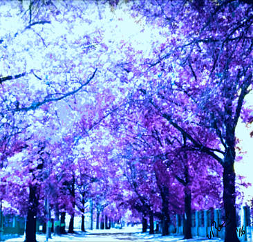 Purple lane by Vanesse Smal