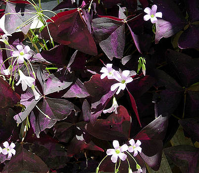 Purple Leaves with Tiny Pink Flowers by Stephanie  H Johnson