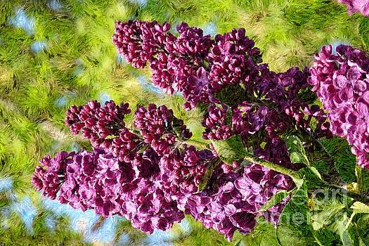Purple Lilac 1 by Jean Bernard Roussilhe