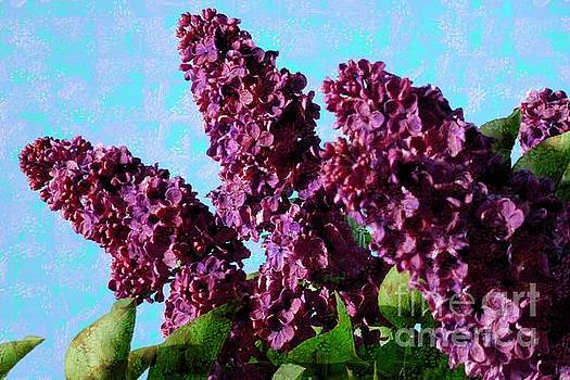 Purple Lilac 2 by Jean Bernard Roussilhe
