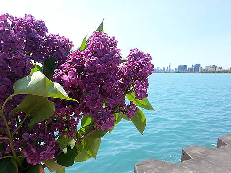 Purple Lilac Cityscape. by Renee Antos