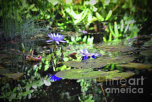 Jost Houk - Purple Lilly Bloom