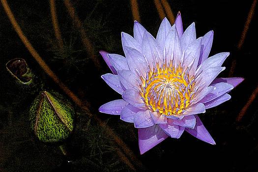 Robert Anschutz - Purple Lily