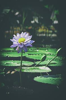 Purple Lily by Scott Wyatt
