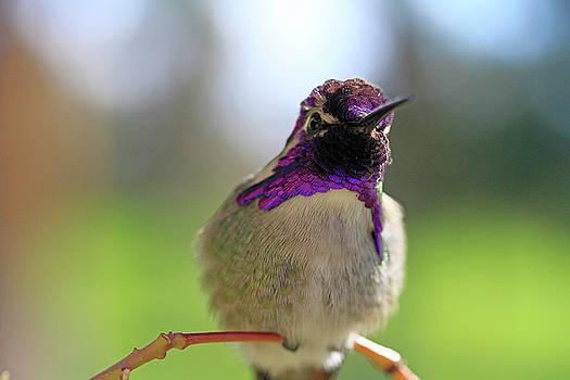 Purple Looks by Shoal Hollingsworth