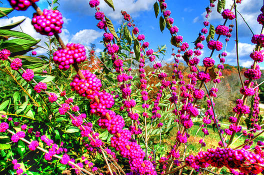 Sam Davis Johnson - Purple Monster Berry Weed