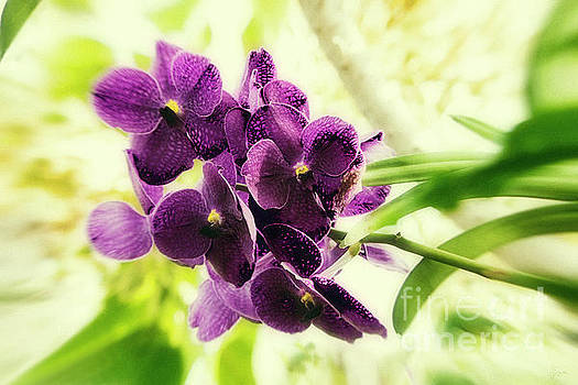 Purple Orchid by Jeff Breiman