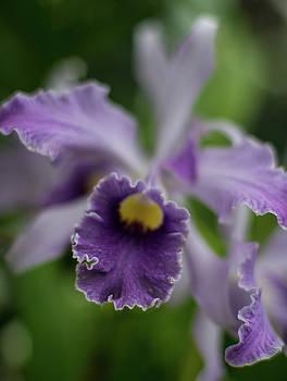 Mike Reid - Purple Orchid