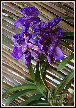 Purple Orchids on Bamboo Wall by Dora Sofia Caputo Photographic Art and Design