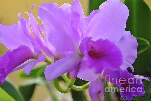 Jost Houk - Purple Orchidaceae