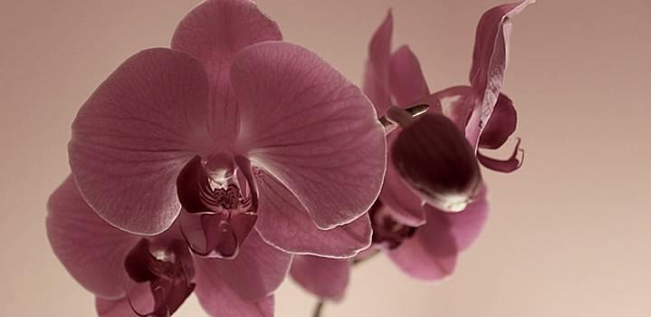 Purple Orchids by Alexa Gurney