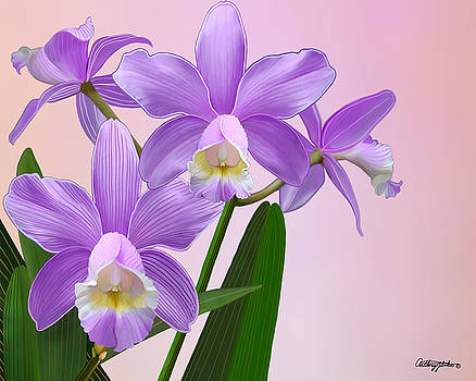 Purple Orchids by Anthony Seeker