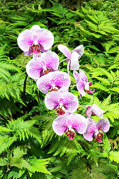 Purple orchids by Joe Belanger