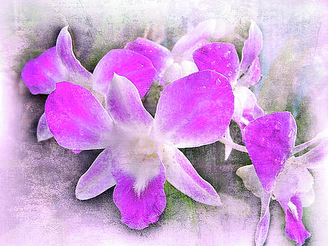 Purple Orchids by Judi Saunders