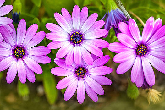 Purple Pals by Az Jackson