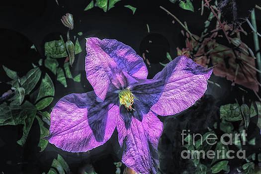 Purple Passion by Arnie Goldstein