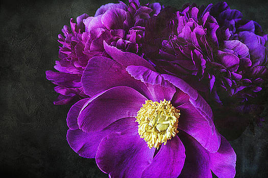 Purple Passion by Cindi Ressler